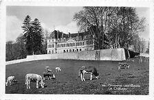 BR17519 Divonne les bains le chateau cow vaches   france