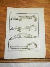 1760 Antique Print/Part Of A Giant Anteater Skeleton