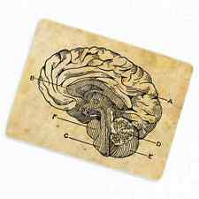 Human Brain Deco Magnet, Decorative Fridge Antique Medical Illustration Anatomy