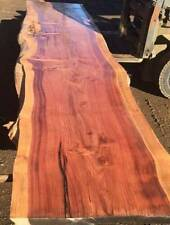 Californian Redwood    Timber Magnificent Massive Slab     Very Rare Opportunity