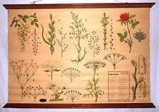 VINTAGE ROLL SCHOOL INFLORESCENCES ANTIQUE POSTER 100x70Cm Cartel BOTANICA