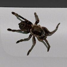 3D Spider Tarantula Realistic Tailgate Hood Window Decal Vehicle Truck Car Vinyl