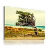 TREE  BEACH OCEAN SEA View Canvas Wall Art Picture Large SIZES  L270  X MATAGA