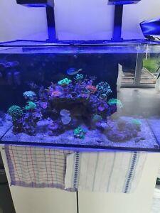 Meerwasser aquarium komplett gebraucht