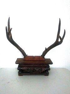 Deer antler display stand for your collector knife or swords ... Guns