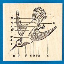 Bird Anatomy Diagram Rubber Stamp by Paula's Kit Club - Birdwatching, Biology