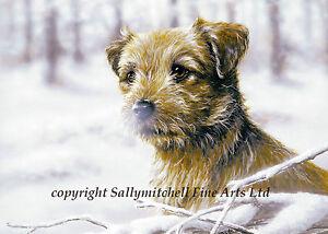 Border Terrier Christmas cards pack of 10.Snow Border.C84
