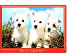 West Highland White Terrier Puppies - Dog Postcard