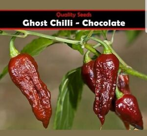 Chilli Seeds Pepper Chocolate Bhut Jolokia Ghost Chilli  100% GENUINE, UK SELLER