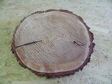 Baumscheibee, Holzscheibe, 20-25 cm, Lärche
