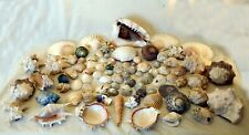 More details for 4kg of tropical exotic beach shells conch spiral clam oyster limpet