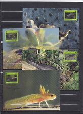 Estonia 2010 - Maxicards- Dieren/Animals/Tiere (Amphibians) - WWF/WNF