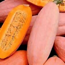 Jumbo Sweet Banana Squash!  HUGE WITH GREAT TASTE! 15 Seeds COMBINED S/H!