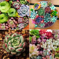 400pc Mixed Succulent Seeds Cactus Home Plant Lithops Rare Living Stones Plants
