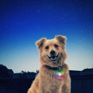 NITE IZE SPOTLIT DISC-O LED LIGHT FOR DOG COLLARS. Visibility at night.