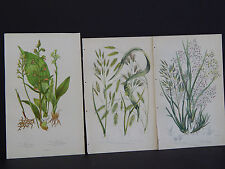 Anne Pratt Botanical, c.1899, Original Color, 3 Prints! English #52