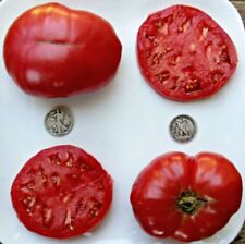 Crnkovic Yugoslavian - Organic Heirloom Tomato Seeds - Huge Beefsteak - 40 Seeds