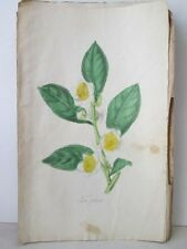 Vintage Print,TEA PLANT,Ladies Wreath+Parlor,c1860