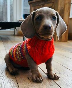 "11"" Hand Knitted Minature Dachshund. Daxie. Doxie. Designer Puppy Jumpers/Coats."