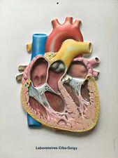 Planche Relief Médecine Anatomie Maladie Système Cardiaque Cabinet Curiosités