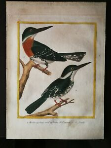 ANTIQUE COLOUR ENGRAVING - KINGFISHER- BY F.N. MARTINET&G.L.BUFFON ,1770-1786