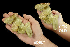 """Green Calcite Crystal 2.5"""" 8-10 Oz Jewelry Rock Mineral Specimen Crystal Stone"""