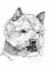 Norwich Terrier Print