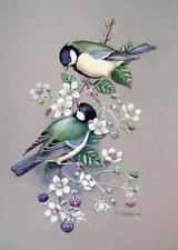 Ornitologia blue tits sulla fioritura BLACKBERRY Margaret sherbourne con col C1971