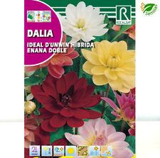 Dalia ideal D'unwin enana doble ( Dahlia variabilis ) 2 G / 200 semillas flores