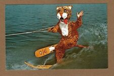 Cypress Gardens,Fl Florida Timmy The Tiger favorite part of Water Show