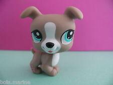 petshop chien jack russell gris / grey dog N° 1463