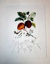 SALVADOR DALI original lithograph 1979, DRAGON APPLE limited 800 Ex