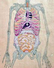 Japanese Medical Anatomical Skeleton Painting 8x10 Real Canvas Giclee Art Print