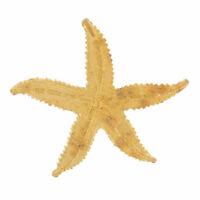 Vintage Pin Brooch 1970S Gold Tone Textured Starfish Star Fish