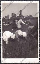MONDINE 66 MONDARISO RISO RISAIA LAVORI AGRICOLI Cartolina REAL PHOTO