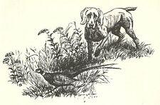 Weimaraner - 1964 Dog Art Print - Matted
