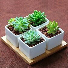 Decorative Mini White Ceramic Succulent Planter Pot  Window Box w/ Wooden Saucer