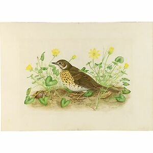 Royal Worcester Artist Buckle Realist Gouache Thrush Celandine Botanist Painting