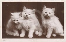 "RPPC of THREE WHITE KITTENS ""Fluffy Kits"" CAT Postcard REAL PHOTO Photograph"