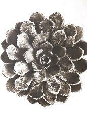 1942 FOTO ORIGINALE STAMPA ROTOCALCO PIASTRA 51. Karl Blossfeldt astratto botanico
