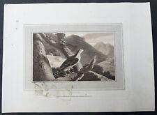 1807 William Daniel Original Antique Ornithological Print of a Goshawk