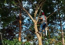 Tree Trimmer Landscape Trimming Service BUSINESS PLAN + MARKETING PLAN -2 PLANS!