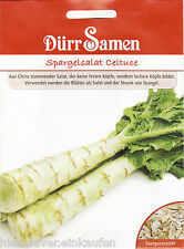 Spargelsalat Celtuce Lactuca sativa angustana 100 Korn Dürr Samen