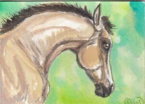 ACEO original Watercolor Art Card Horse buckskin Half Arabian PBA COLT foal