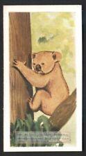 Koala Bear Australia Marsupial 60+ Y/O Ad Trade Card
