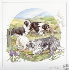BORDER COLLIE WORKING SHEEPDOG LIMITED EDITION PRINT