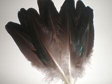 lot de 10 plumes paon noir a reflet bleues 15 cm
