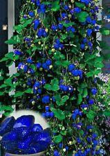 30pcs Blue Climbing Strawberry Seeds Imported Garden seeds Edible fruit Seeds
