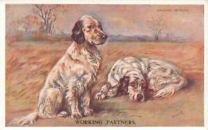 Early ENGLISH SETTERS  Working Partners   MAC  Lucy Dawson  Dog Postcard
