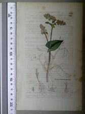 English Botany, Smith, Sowerby, handcoloured copperplate, 574, 3.Edition,1850.